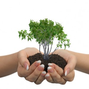 Interior Plant Landscape Services