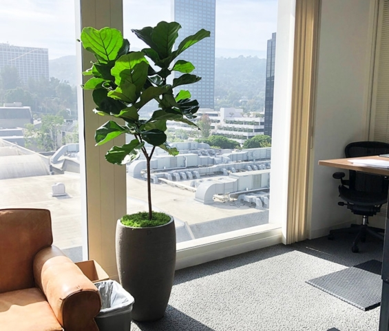 indoor plant lease program southern california