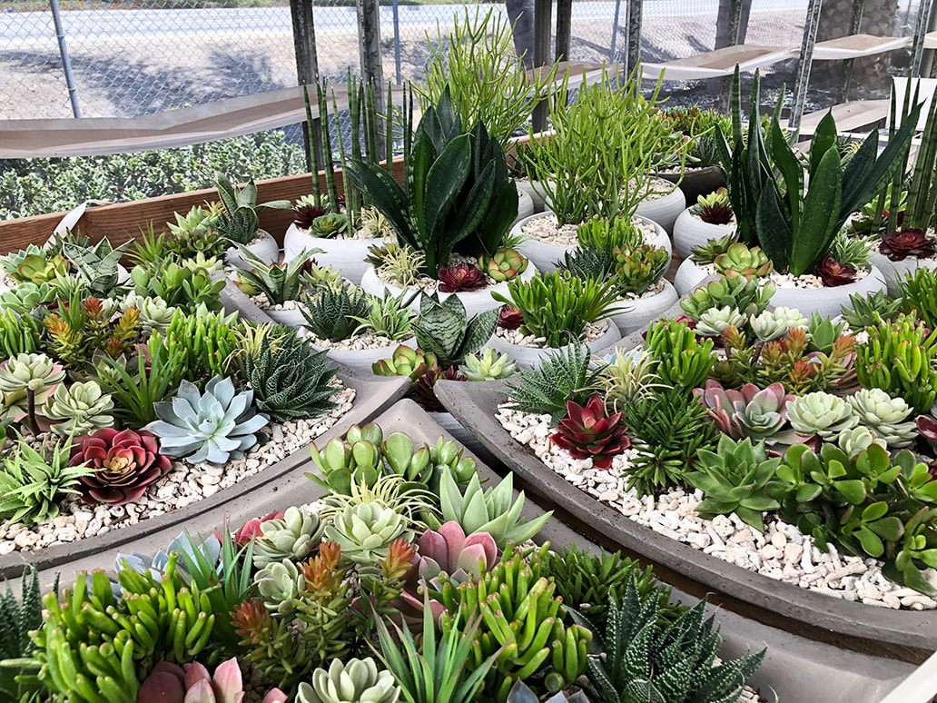interior plant design california