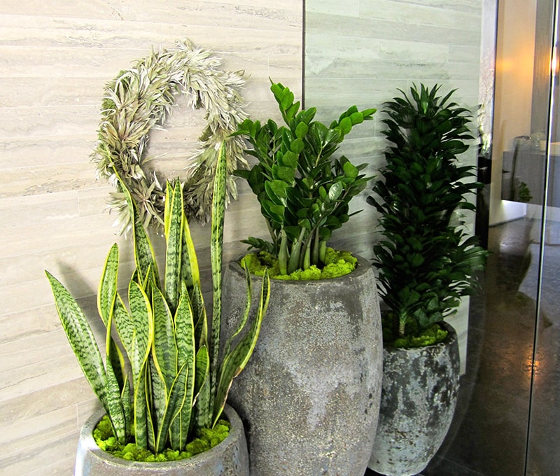 interior plant design guarentee southern california