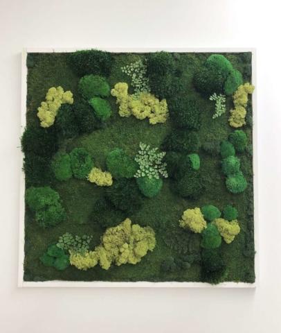 succulent moss wall