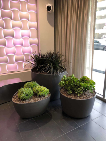 indoor plant and flower services