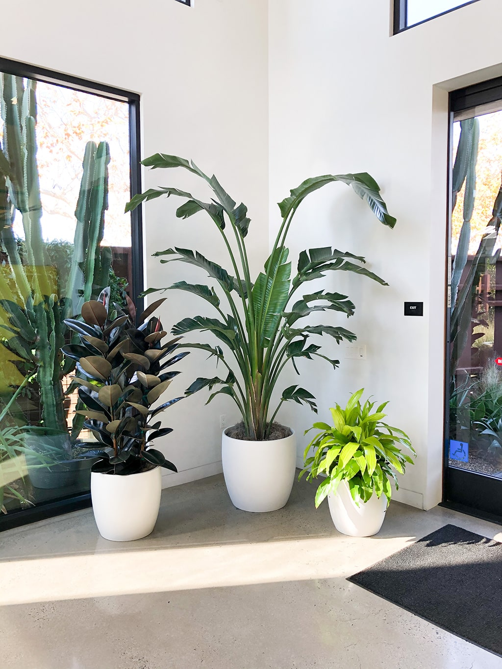 office plant design southern california