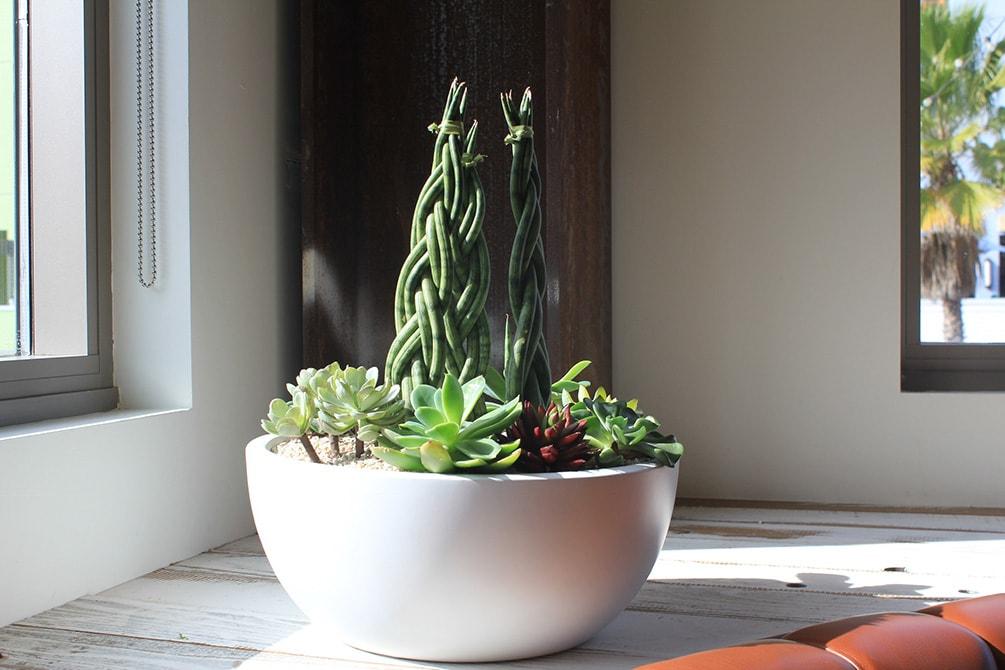 plant arrangement services