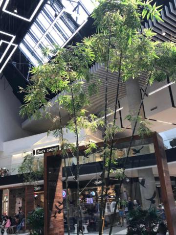 retail tree landscape design