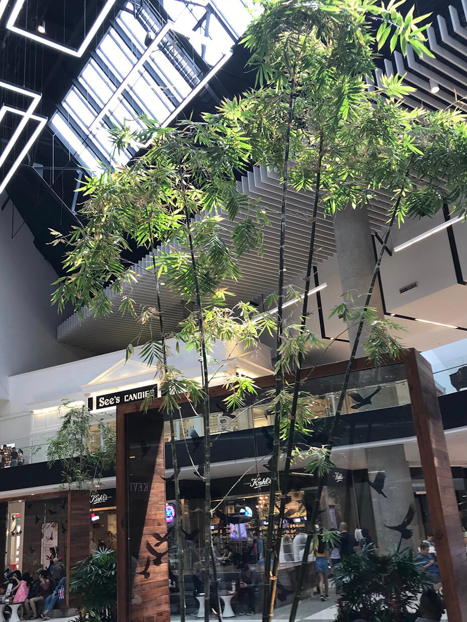 retail tree landscape design